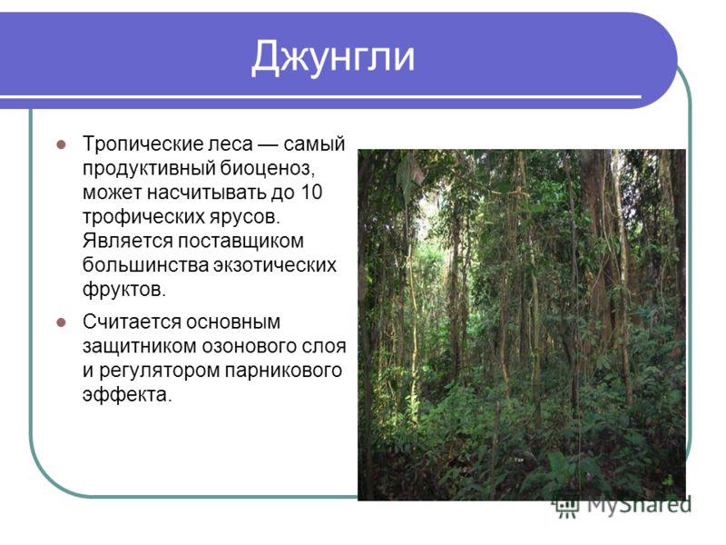 Джунгли Тропические леса самый продуктивный биоценоз, может насчитывать до 10 трофических ярусов. Является поставщиком большинства экзотических фруктов. Считается основным защитником озонового слоя и регулятором парникового эффекта.