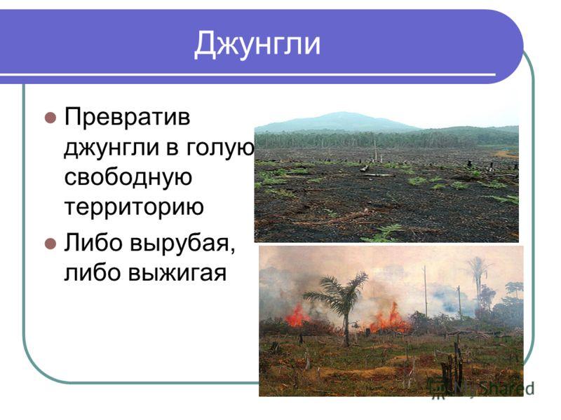 Джунгли Превратив джунгли в голую, свободную территорию Либо вырубая, либо выжигая