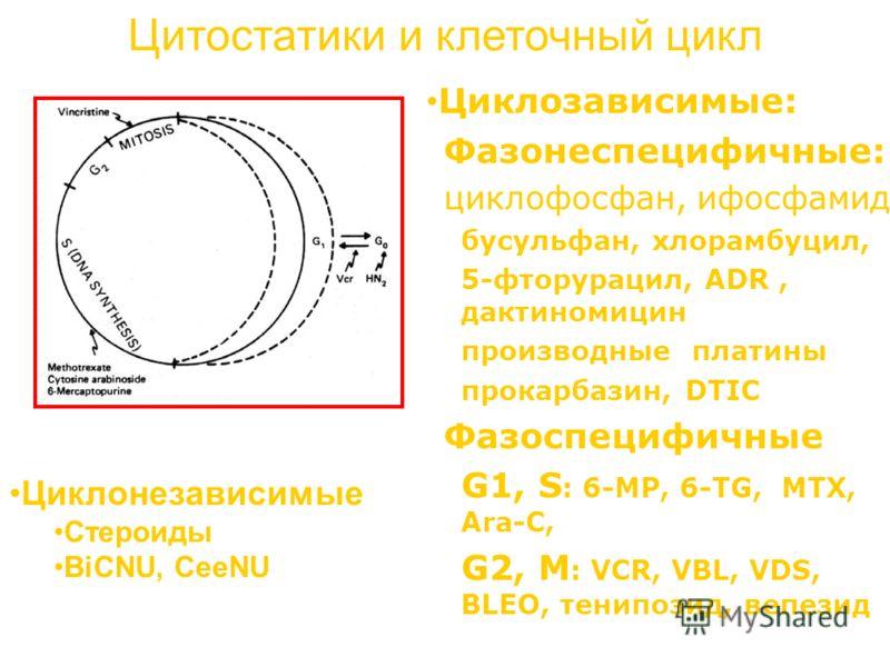 Цитостатики и клеточный цикл Циклозависимые: Фазонеспецифичные: циклофосфан, ифосфамид бусульфан, хлорамбуцил, 5-фторурацил, ADR, дактиномицин производные платины прокарбазин, DTIC Фазоспецифичные G1, S : 6-MP, 6-TG, MTX, Ara-C, G2, M : VCR, VBL, VDS