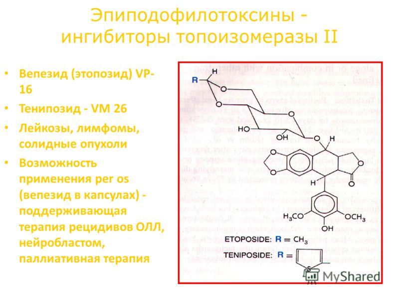 Эпиподофилотоксины - ингибиторы топоизомеразы II Вепезид (этопозид) VP- 16 Тенипозид - VM 26 Лейкозы, лимфомы, солидные опухоли Возможность применения per os (вепезид в капсулах) - поддерживающая терапия рецидивов ОЛЛ, нейробластом, паллиативная тера