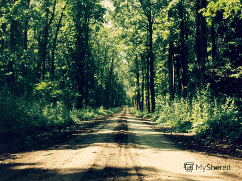 Шипов лес Площадь - 32 тыс. га. Шипов лес – место рождения и смерти «идеального дуба»