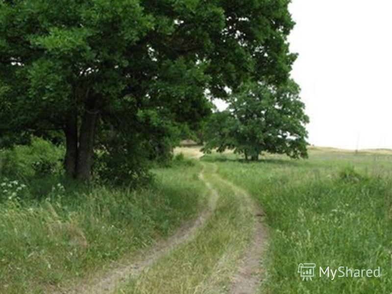 Воронеж: Леса – 11% Дубравы – большая часть