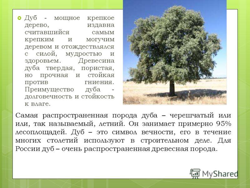 Дуб - мощное крепкое дерево, издавна считавшийся самым крепким и могучим деревом и отождествлялся с силой, мудростью и здоровьем. Древесина дуба твердая, пористая, но прочная и стойкая против гниения. Преимущество дуба - долговечность и стойкость к в