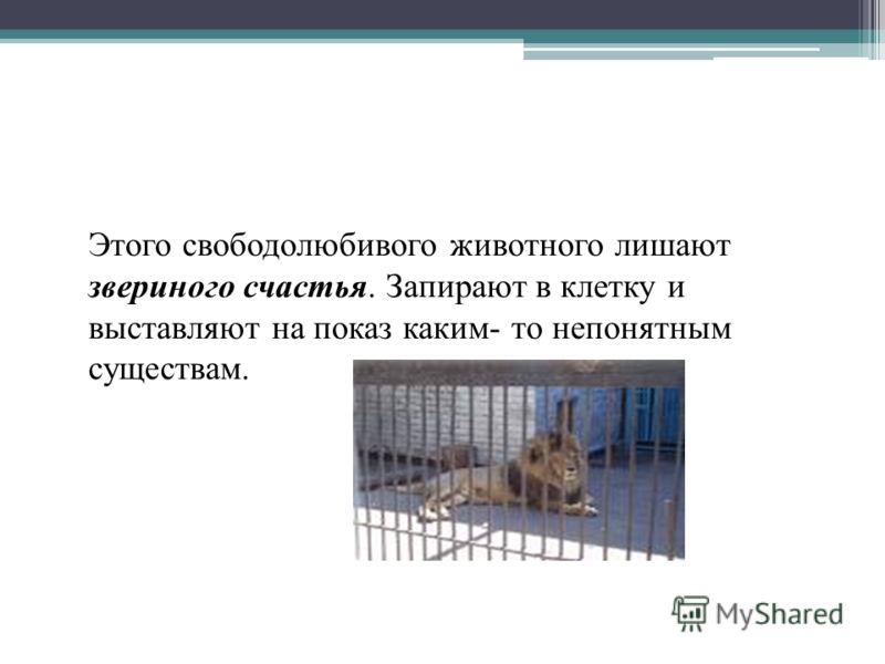 Этого свободолюбивого животного лишают звериного счастья. Запирают в клетку и выставляют на показ каким- то непонятным существам.