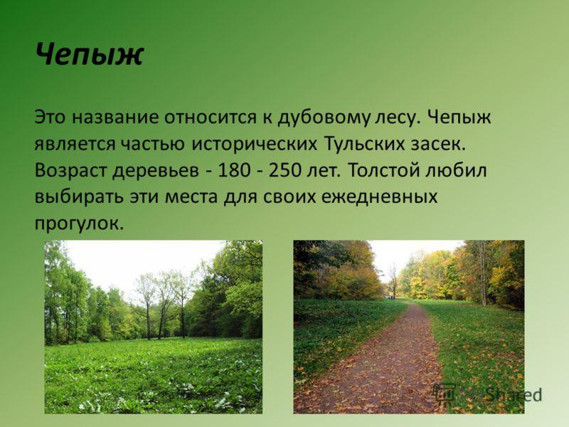 Чепыж Это название относится к дубовому лесу. Чепыж является частью исторических Тульских засек. Возраст деревьев - 180 - 250 лет. Толстой любил выбирать эти места для своих ежедневных прогулок.