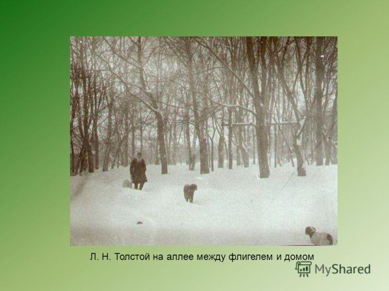 Л. Н. Толстой на аллее между флигелем и домом