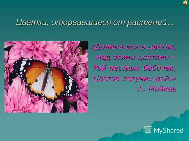 Цветки, оторвавшиеся от растений… «Долина вся в цветах, Над этими цветами – Рой пестрых бабочек, Цветов летучих рой.» А. Майков А. Майков