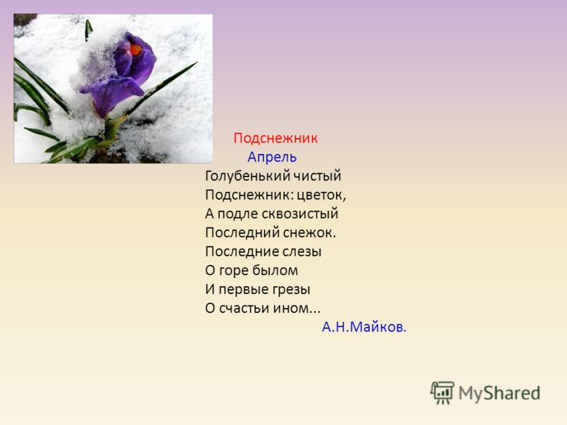 а. в.кольцов фото