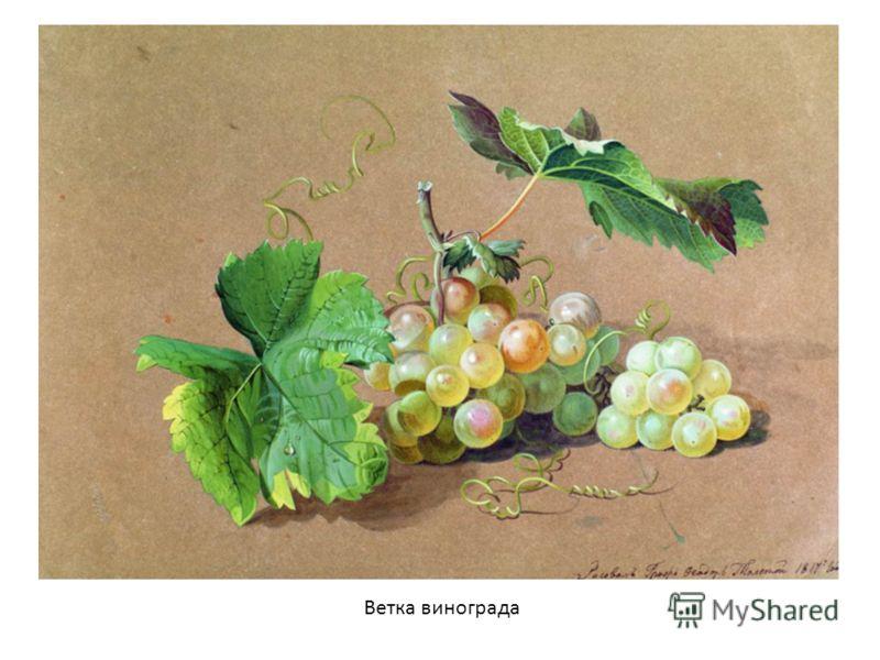 фрукты на фото на ф