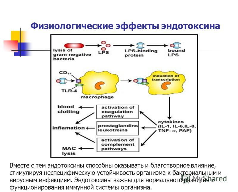 Физиологические эффекты эндотоксина Вместе с тем эндотоксины способны оказывать и благотворное влияние, стимулируя неспецифическую устойчивость организма к бактериальным и вирусным инфекциям. Эндотоксины важны для нормального развития и функционирова