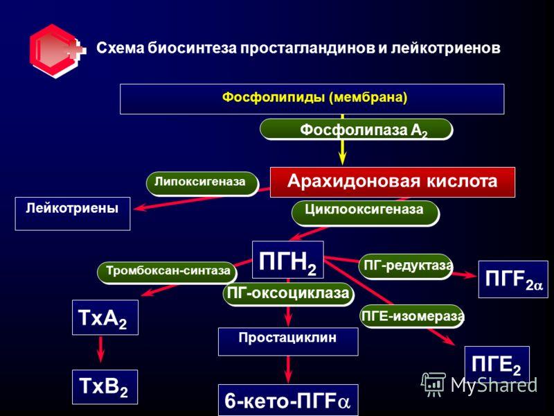 Схема биосинтеза простагландинов и лейкотриенов Арахидоновая кислота Лейкотриены ПГН 2 ПГF 2 ПГЕ 2 Простациклин 6-кето-ПГF TxA 2 TxB 2 Липоксигеназа Тромбоксан-синтаза ПГ-оксоциклаза Фосфолипиды (мембрана) Фосфолипаза А 2 ПГЕ-изомераза ПГ-редуктаза Ц