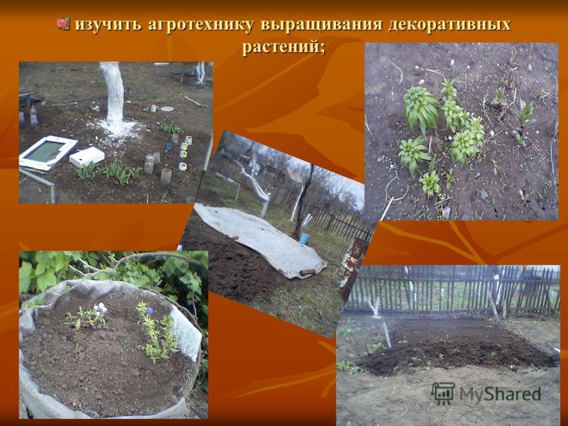изучить агротехнику выращивания декоративных растений; изучить агротехнику выращивания декоративных растений;