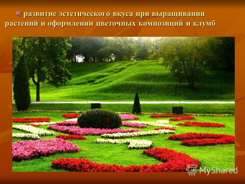 развитие эстетического вкуса при выращивании растений и оформлении цветочных композиций и клумб развитие эстетического вкуса при выращивании растений и оформлении цветочных композиций и клумб