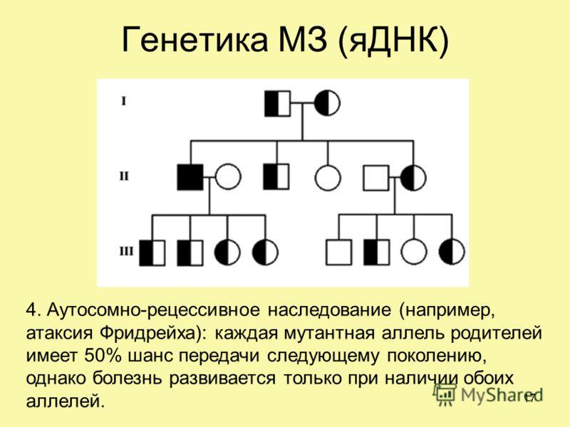 Генетика МЗ (яДНК) 4. Аутосомно-рецессивное наследование (например, атаксия Фридрейха): каждая мутантная аллель родителей имеет 50% шанс передачи следующему поколению, однако болезнь развивается только при наличии обоих аллелей. 17