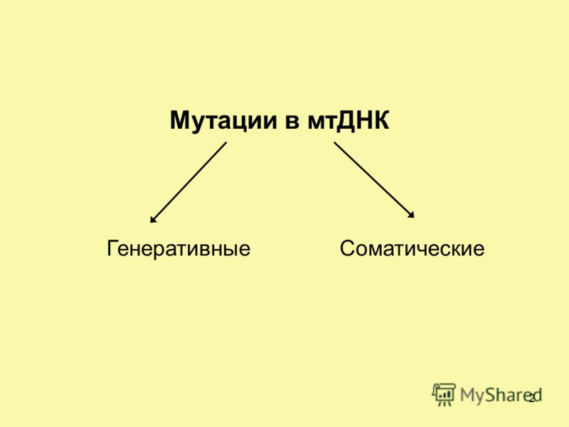 Мутации в мтДНК СоматическиеГенеративные 2