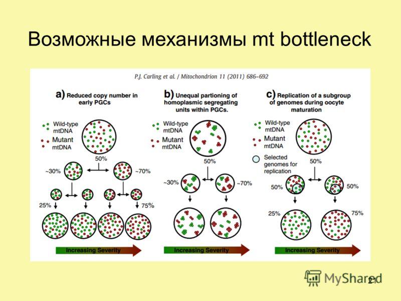 Возможные механизмы mt bottleneck 21
