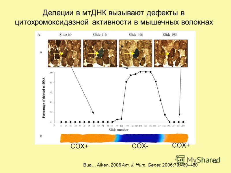Bua… Aiken. 2006 Am. J. Hum. Genet. 2006;79:469–480 Делеции в мтДНК вызывают дефекты в цитохромоксидазной активности в мышечных волокнах COX- COX+ 46