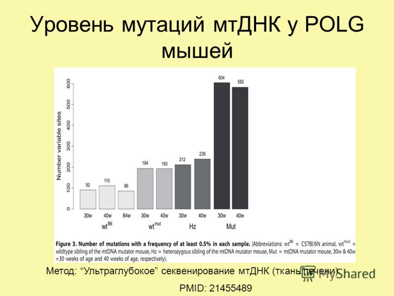 Уровень мутаций мтДНК у POLG мышей PMID: 21455489 Метод: Ультраглубокое секвенирование мтДНК (ткань печени).