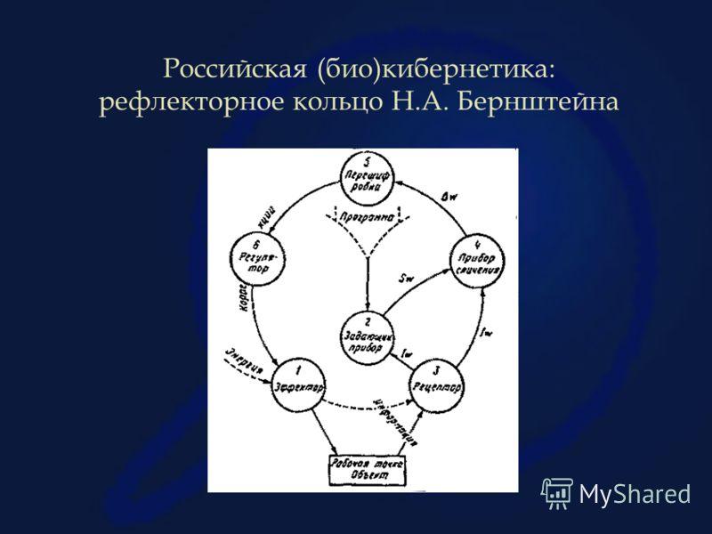 Российская (био)кибернетика: рефлекторное кольцо Н.А. Бернштейна