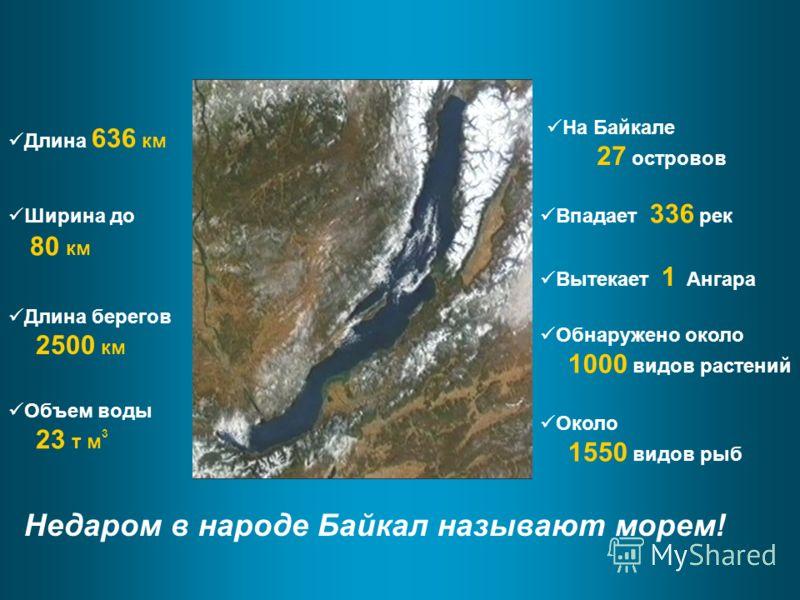Недаром в народе Байкал называют морем! На Байкале 27 островов Впадает 336 рек Вытекает 1 Ангара Обнаружено около 1000 видов растений Около 1550 видов рыб Длина 636 км Ширина до 80 км Длина берегов 2500 км Объем воды 23 т м 3