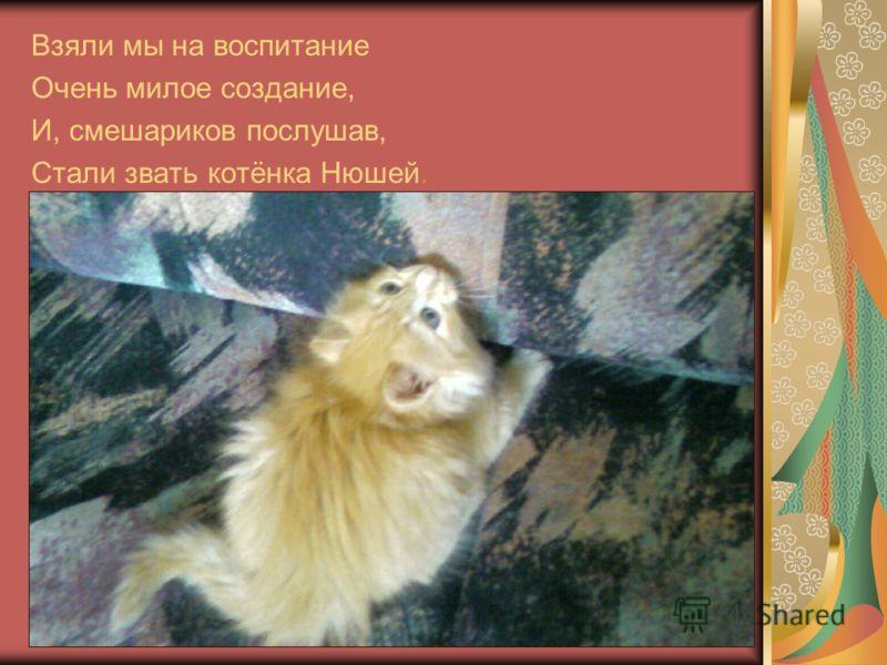 Взяли мы на воспитание Очень милое создание, И, смешариков послушав, Стали звать котёнка Нюшей.