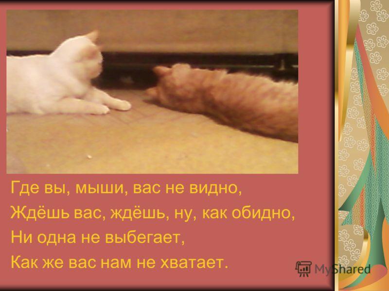 Где вы, мыши, вас не видно, Ждёшь вас, ждёшь, ну, как обидно, Ни одна не выбегает, Как же вас нам не хватает.