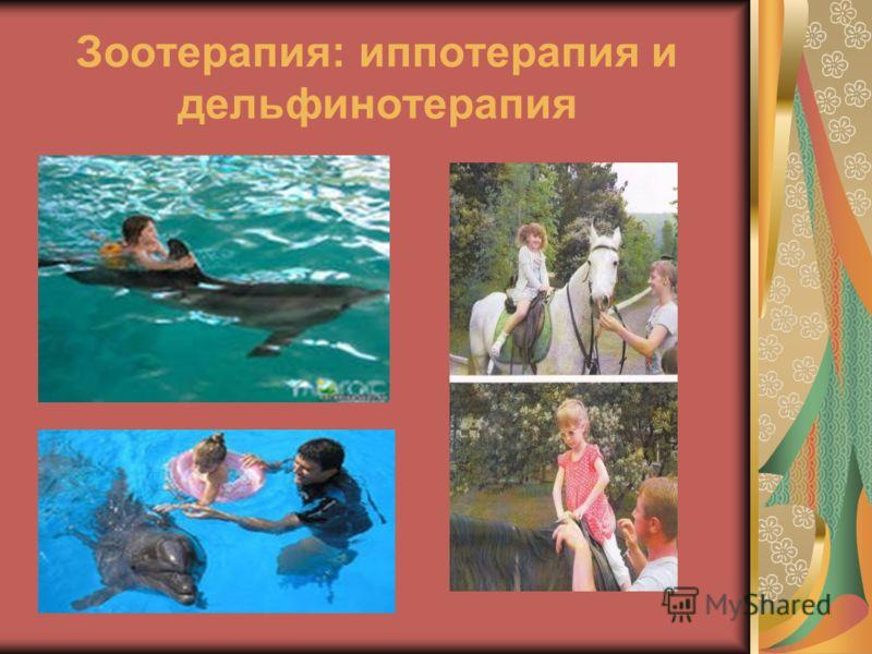 Зоотерапия: иппотерапия и дельфинотерапия