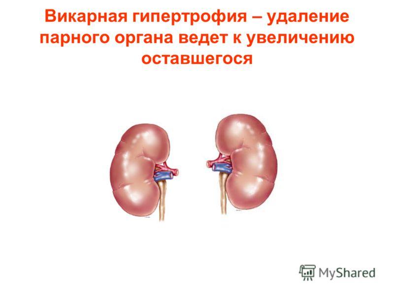 Викарная гипертрофия – удаление парного органа ведет к увеличению оставшегося