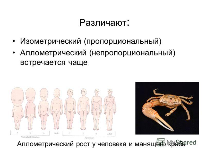 Различают : Изометрический (пропорциональный) Аллометрический (непропорциональный) встречается чаще Аллометрический рост у человека и манящего краба