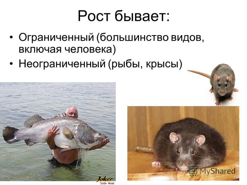 Рост бывает: Ограниченный (большинство видов, включая человека) Неограниченный (рыбы, крысы)