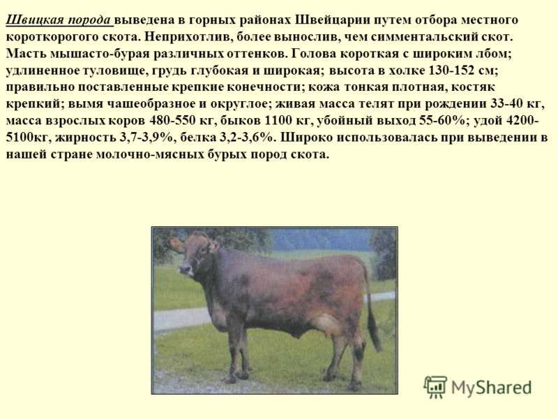 Швицкая порода выведена в горных районах Швейцарии путем отбора местного короткорогого скота. Неприхотлив, более вынослив, чем симментальский скот. Масть мышасто-бурая различных оттенков. Голова короткая с широким лбом; удлиненное туловище, грудь глу