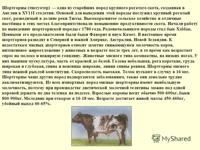 Шортгорны (тиссуотер) одна из старейших пород крупного рогатого скота, созданная в Англии в XV11I столетии. Основой для выведения этой породы послужил крупный рогатый скот, разводимый в долине реки Тиссы. Высокоразвитое сельское хозяйство и отличные