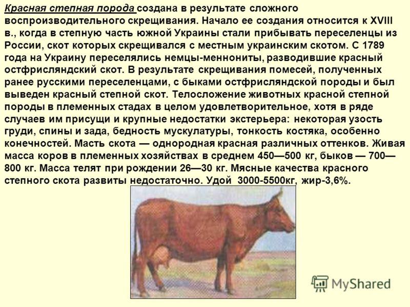 Красная степная порода создана в результате сложного воспроизводительного скрещивания. Начало ее создания относится к XVIII в., когда в степную часть южной Украины стали прибывать переселенцы из России, скот которых скрещивался с местным украинским с