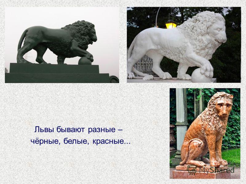 Львы бывают разные – чёрные,белые,красные...
