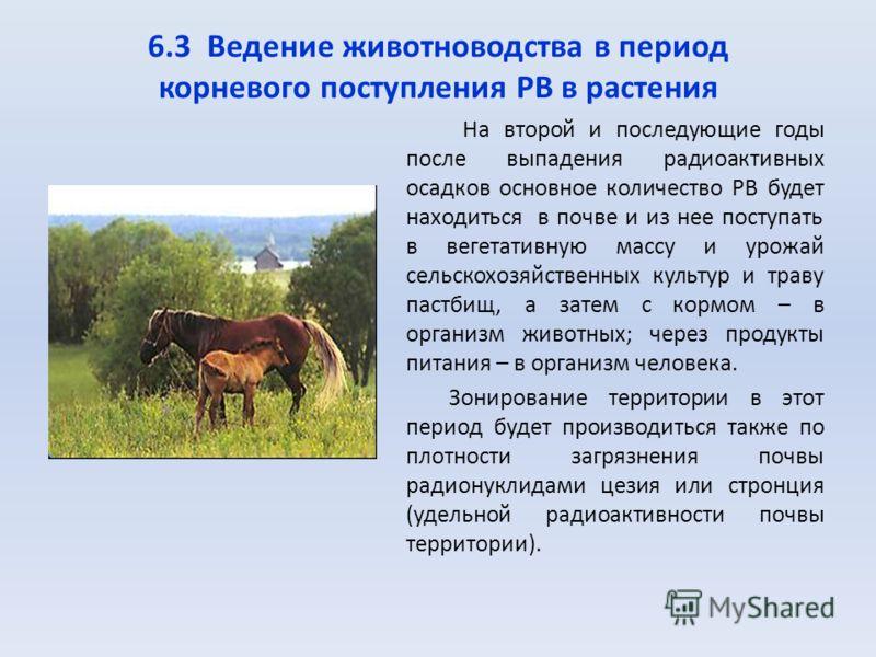 6.3 Ведение животноводства в период корневого поступления РВ в растения На второй и последующие годы после выпадения радиоактивных осадков основное количество РВ будет находиться в почве и из нее поступать в вегетативную массу и урожай сельскохозяйст