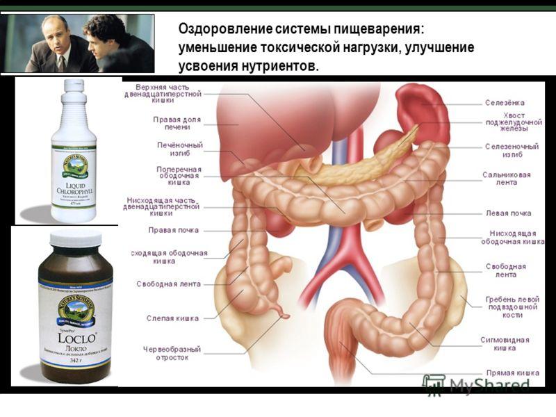 Анатомия толстого кишечника Оздоровление системы пищеварения: уменьшение токсической нагрузки, улучшение усвоения нутриентов.