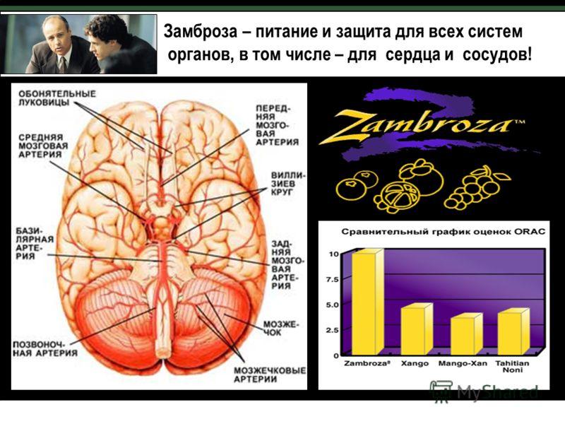 Замброза – питание и защита для всех систем органов, в том числе – для сердца и сосудов!