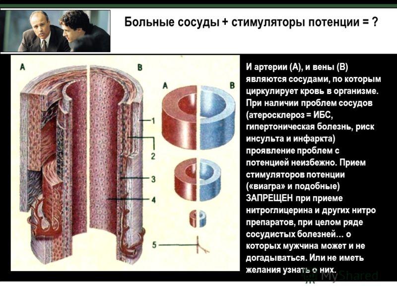 И артерии (А), и вены (В) являются сосудами, по которым циркулирует кровь в организме. При наличии проблем сосудов (атеросклероз = ИБС, гипертоническая болезнь, риск инсульта и инфаркта) проявление проблем с потенцией неизбежно. Прием стимуляторов по