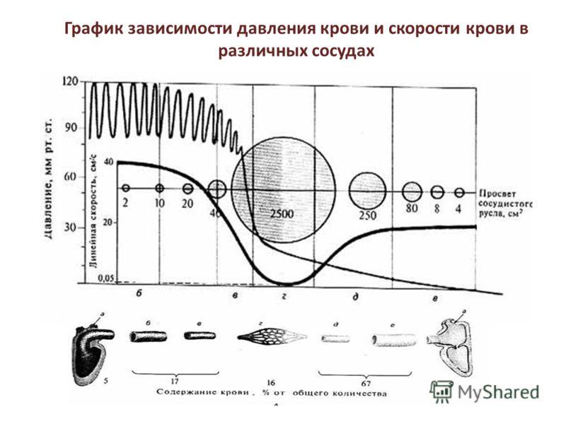 График зависимости давления крови и скорости крови в различных сосудах