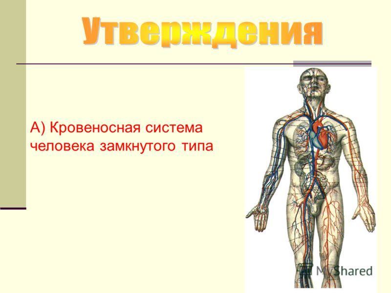 А) Кровеносная система человека замкнутого типа