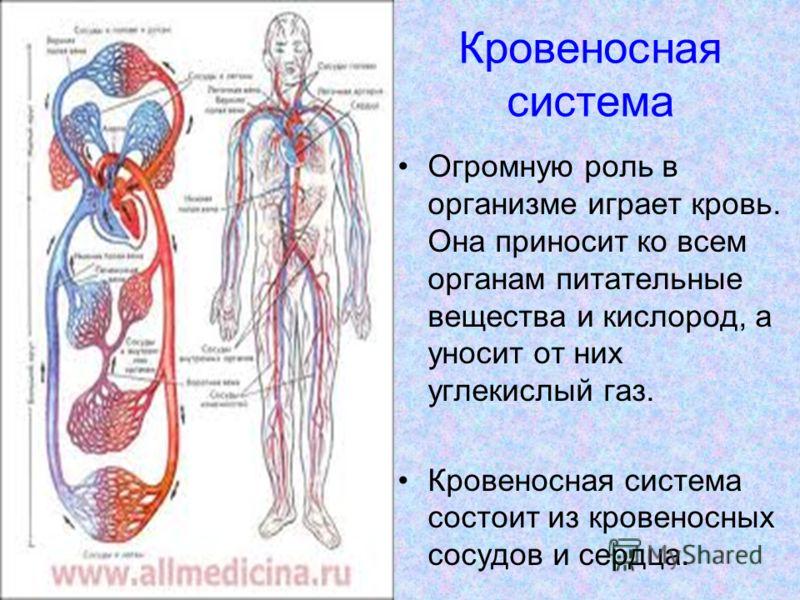 Кровеносная система Огромную роль в организме играет кровь. Она приносит ко всем органам питательные вещества и кислород, а уносит от них углекислый газ. Кровеносная система состоит из кровеносных сосудов и сердца.