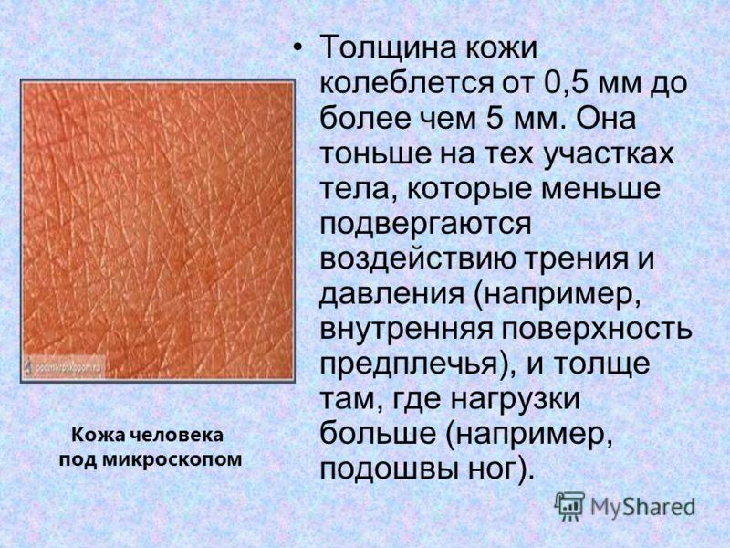 Толщина кожи колеблется от 0,5 мм до более чем 5 мм. Она тоньше на тех участках тела, которые меньше подвергаются воздействию трения и давления (например, внутренняя поверхность предплечья), и толще там, где нагрузки больше (например, подошвы ног). К
