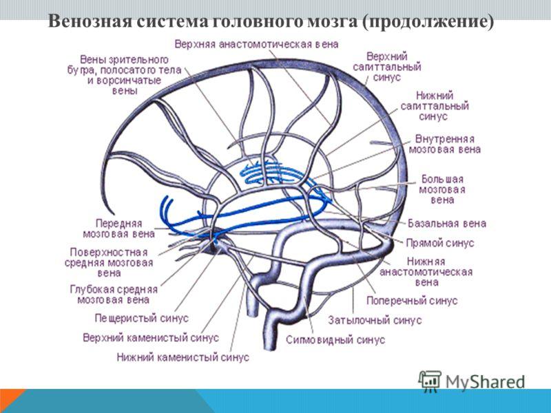 Венозная система головного мозга (продолжение)