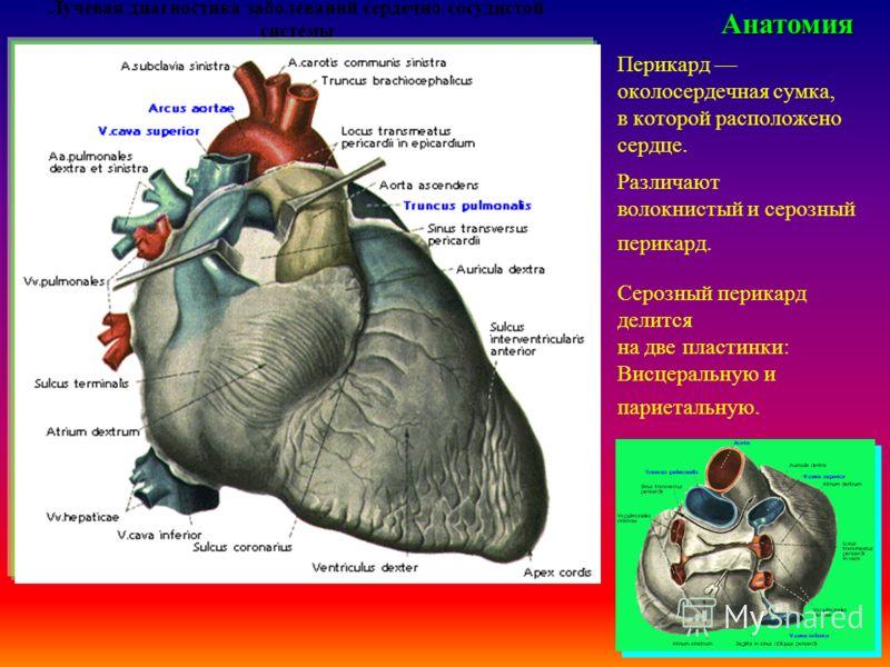 Лучевая диагностика заболеваний сердечно-сосудистой системыАнатомия Перикард околосердечная сумка, в которой расположено сердце. Различают волокнистый и серозный перикард. Серозный перикард делится на две пластинки: Висцеральную и париетальную.
