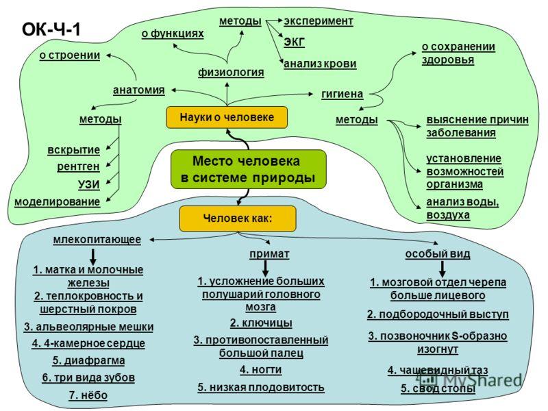 ОК-Ч-1 Место человека в системе природы Науки о человеке Человек как: анатомия о строении методы вскрытие рентген УЗИ моделирование физиология о функциях методыэксперимент ЭКГ анализ крови гигиена о сохранении здоровья методывыяснение причин заболева