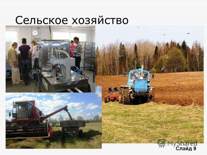 Сельское хозяйство Слайд 9