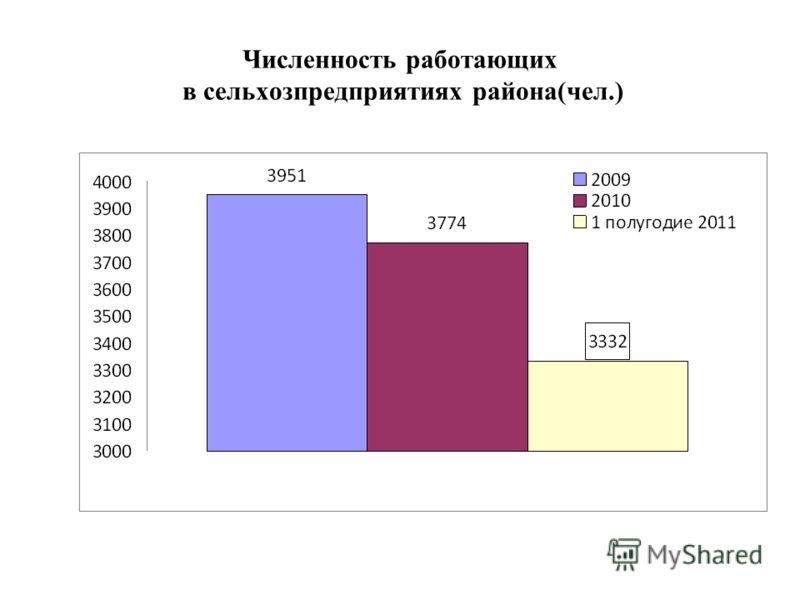 Численность работающих в сельхозпредприятиях района(чел.)
