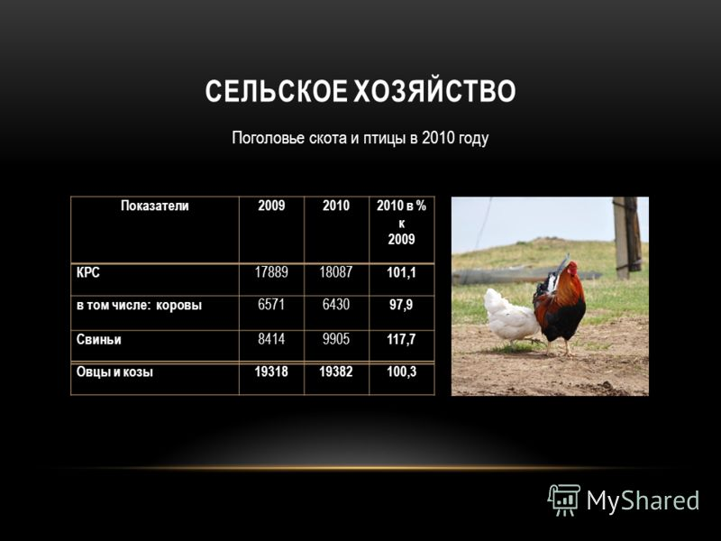 СЕЛЬСКОЕ ХОЗЯЙСТВО Поголовье скота и птицы в 2010 году Показатели 200920102010 в % к 2009 КРС 1788918087 101,1 в том числе: коровы 65716430 97,9 Свиньи 84149905 117,7 Овцы и козы1931819382100,3