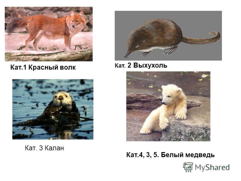 Кат.1 Красный волк Кат. 2 Выхухоль Кат.4, 3, 5. Белый медведь Кат. 3 Калан