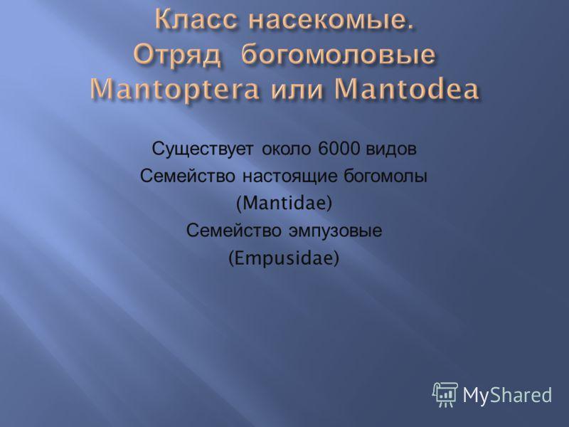 Существует около 6000 видов Семейство настоящие богомолы (Mantidae) Семейство эмпузовые (Empusidae)